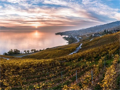 Weinberge am Genfer See - Seminarhotels in Lausanne - Seminarhotels Schweiz - MICE Service Group